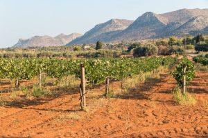 Vineyard vinolio